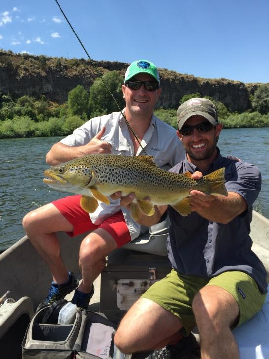 Idaho Big Brown
